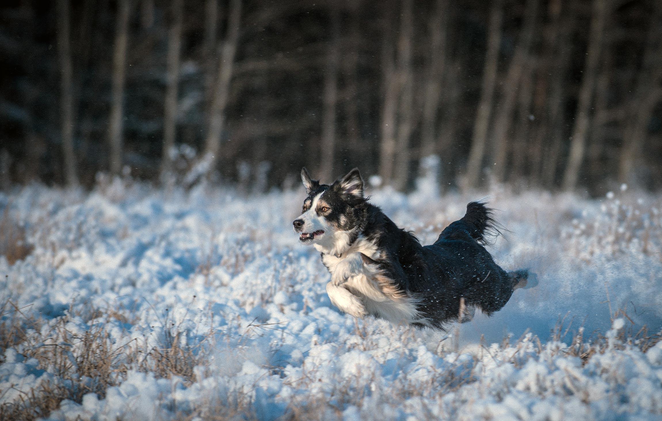 Eläinlääkäriasema Helmi tietoartikkelit - Aktiivisen koiran vitamiinilisät