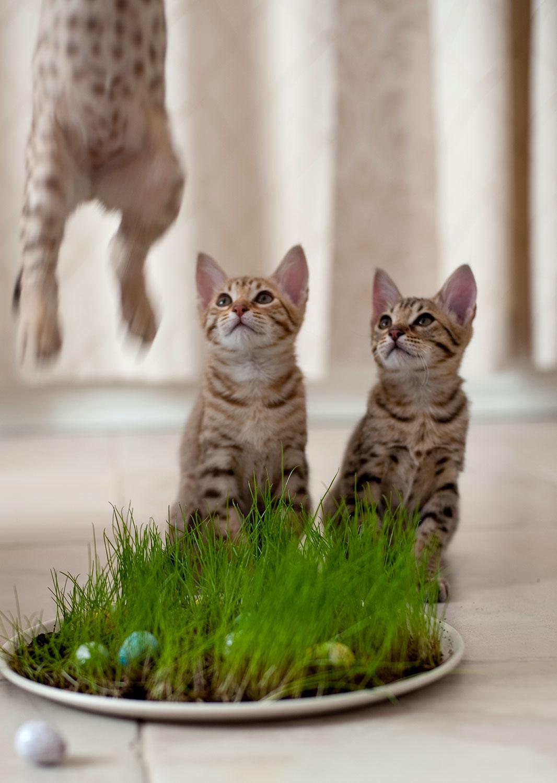 Eläinlääkäriasema Helmessä on kissoille omat tilat