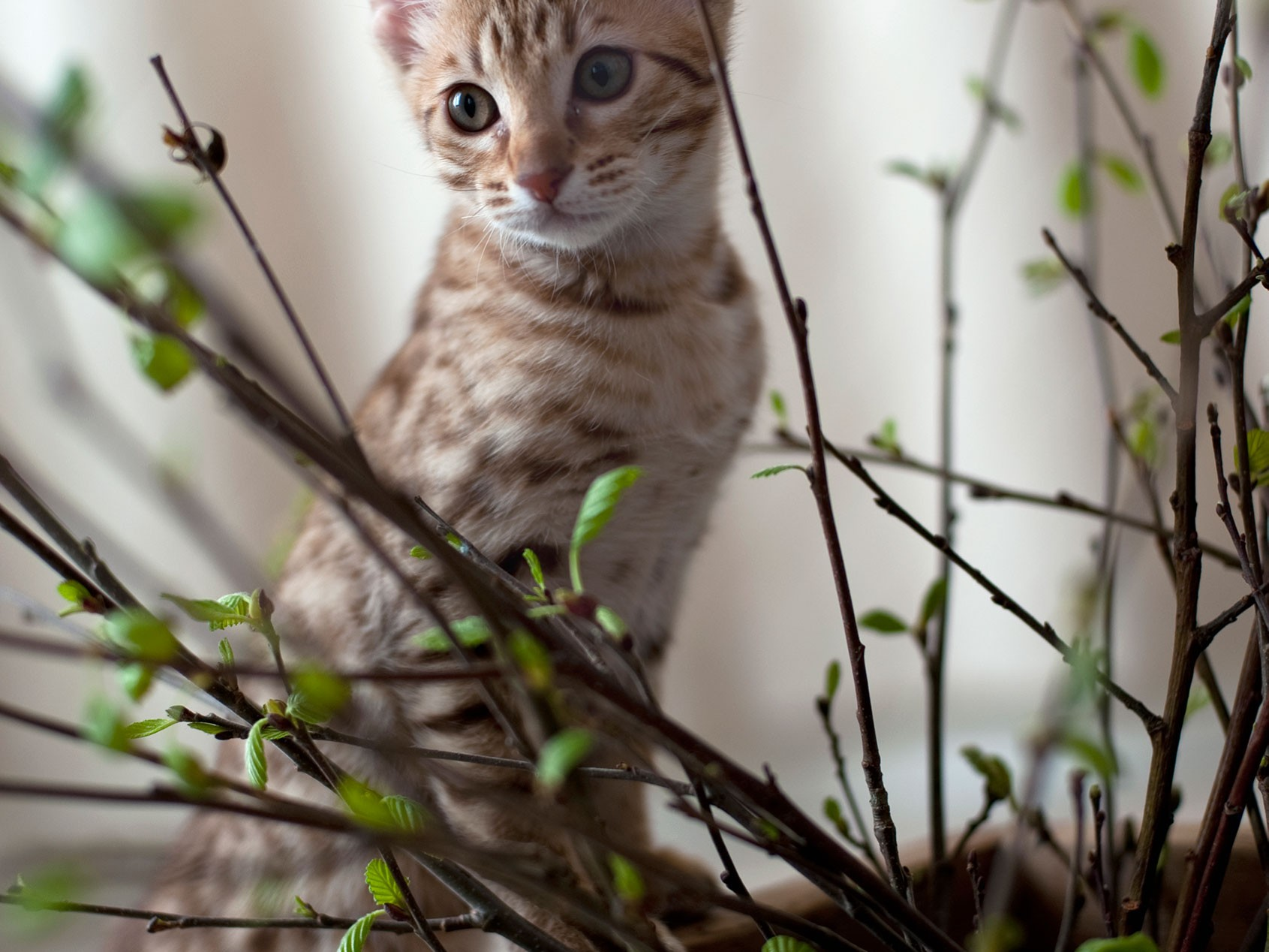 Eläinlääkäriasema Helmen tietoartikkelit - Kissan kutina