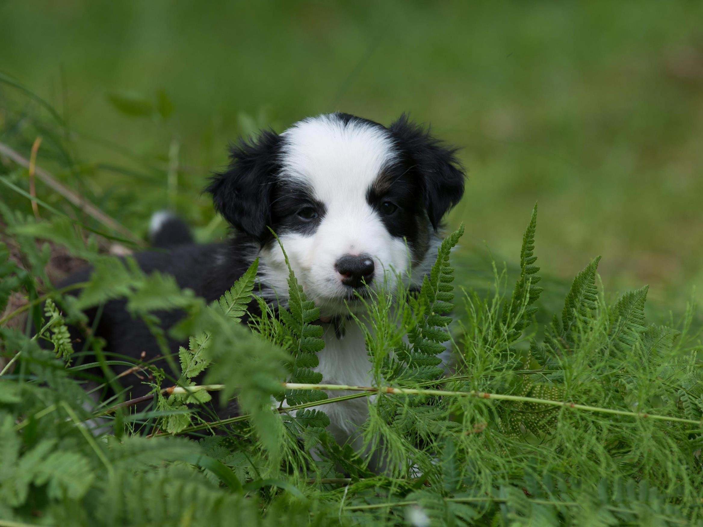 Eläinlääkäriasema Helmen tietoartikkelit - Koiran synnytys