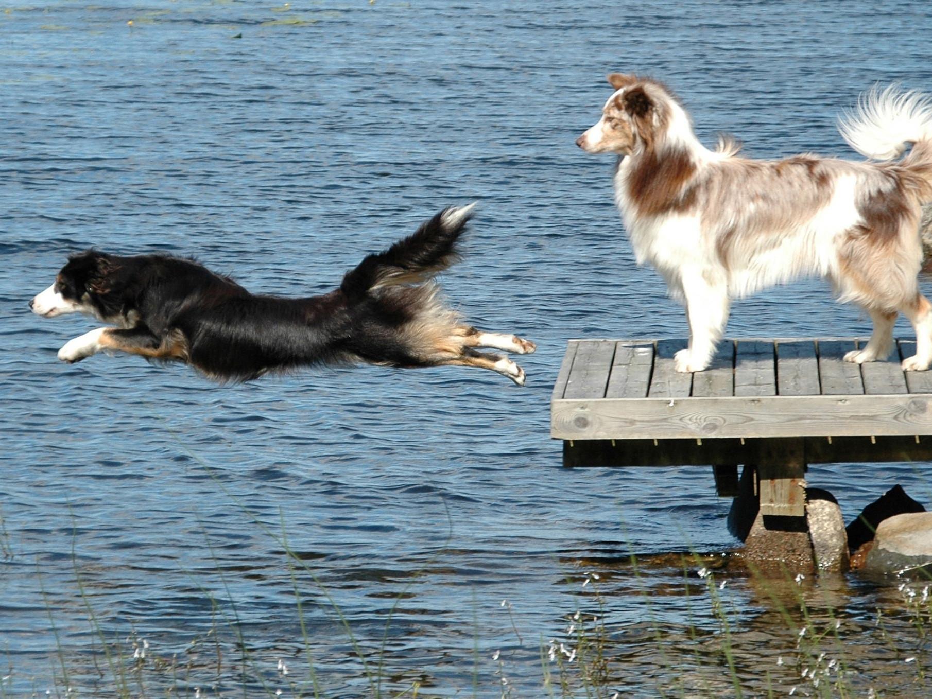 Eläinlääkäriasema Helmen tietoartikkelit - Koiran ylipaino