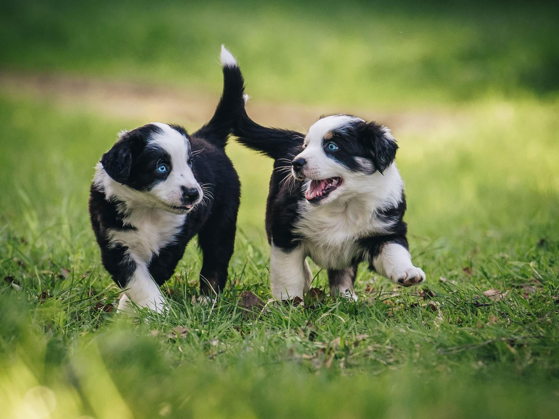 Eläinlääkäriaseman Helmen tietoartikkelit - Koiranpentu tulee taloon