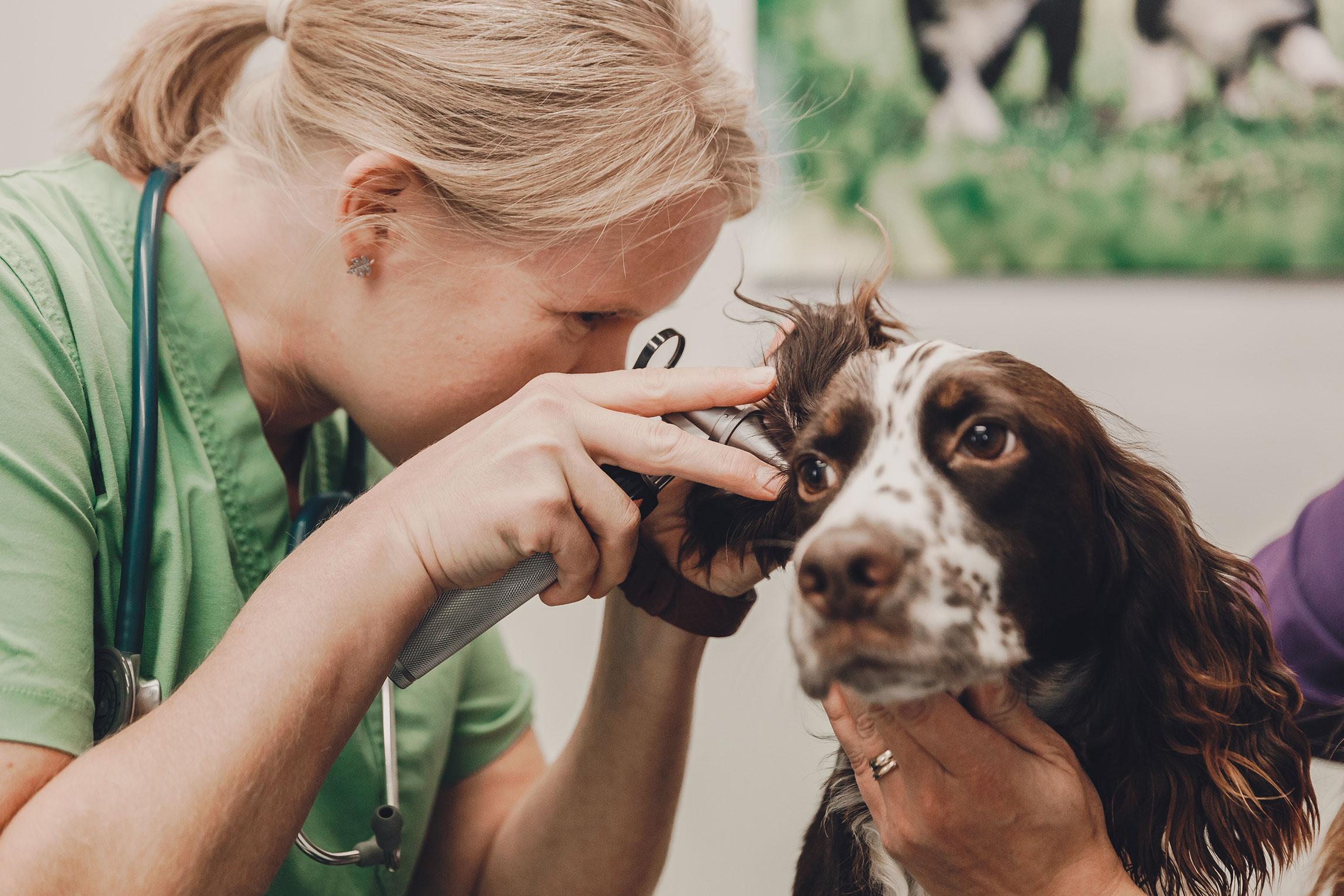 Eläinlääkäriasema Helmen palvelut
