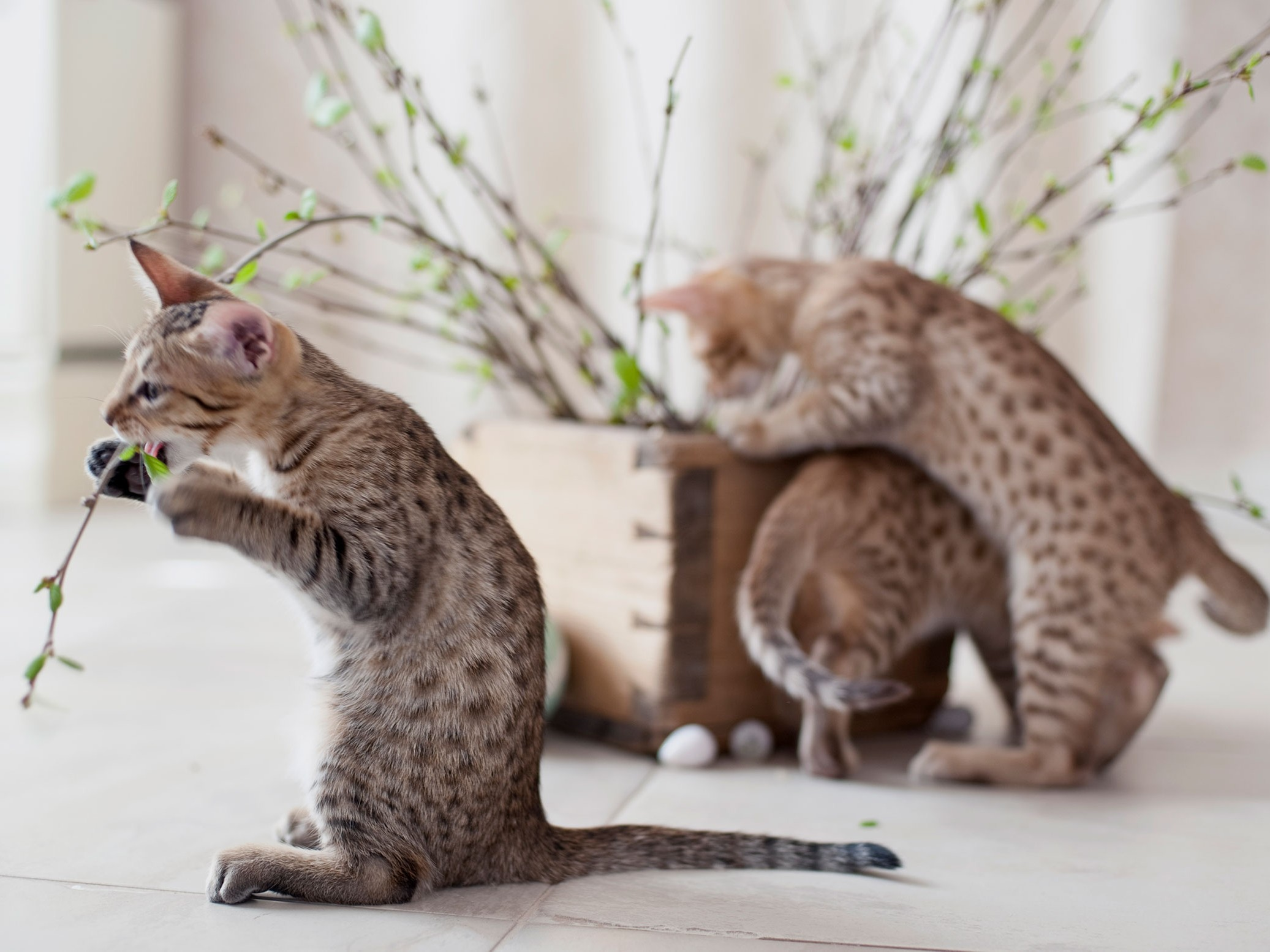 Asiaa lemmikkien sairauksista ja hyvinvoinnista