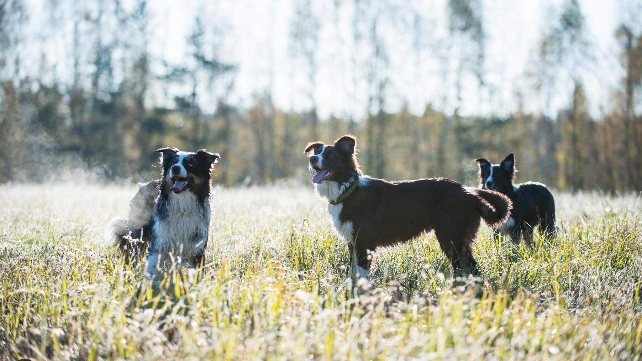 Eläinlääkäriasema Helmen tietoartikkelit - Vanheneva lemmikki