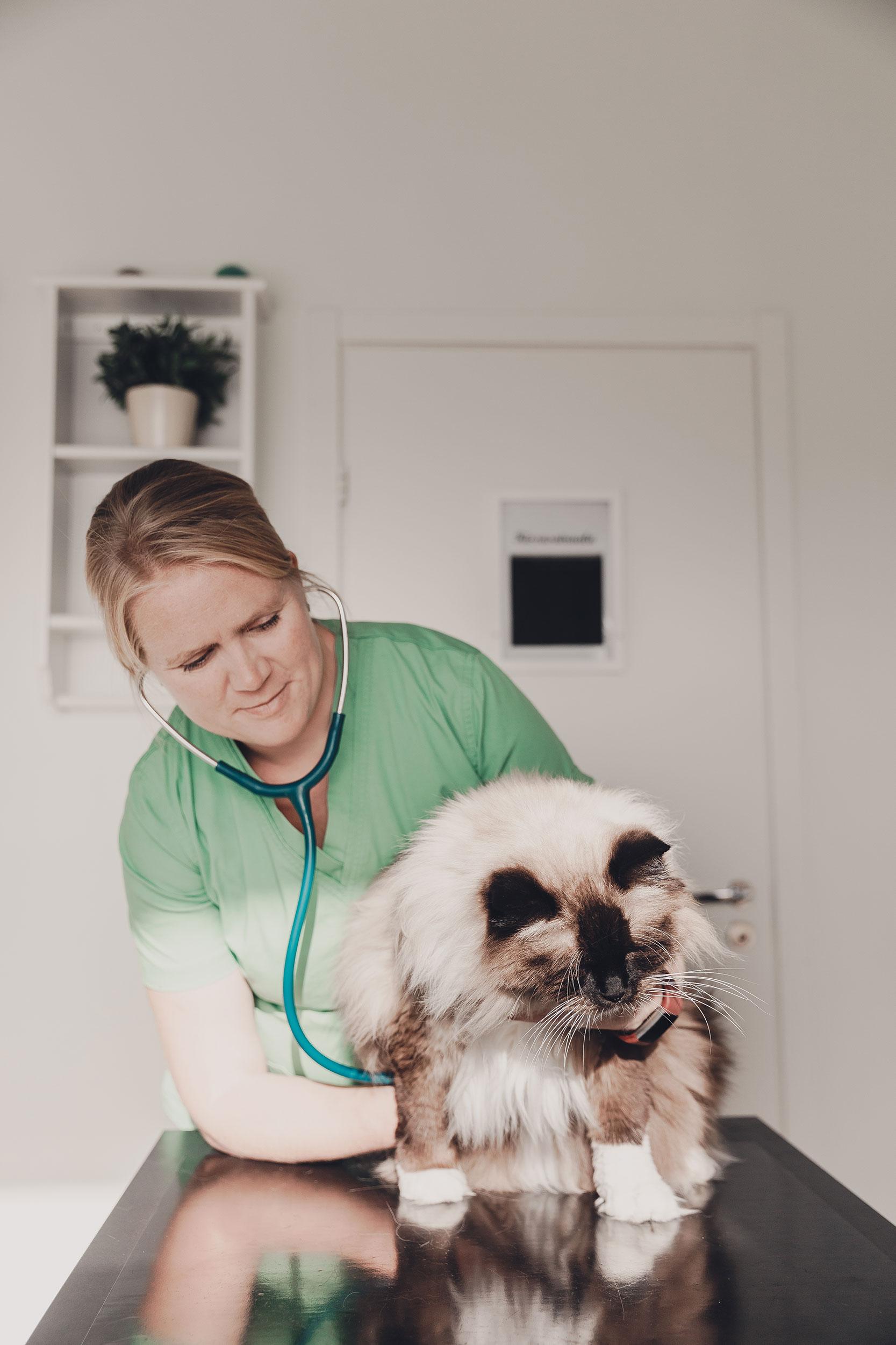 Eläinlääkäriasema Helmen tietoartikkelit - Elintärkeät vitamiinit ja rasvahapot