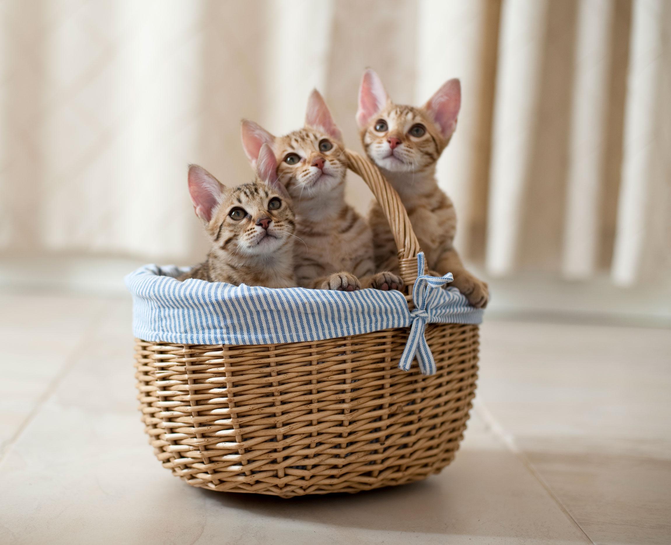 Eläinlääkäriasema Helmen tietoartikkelit - Kissanpentu tulee taloon